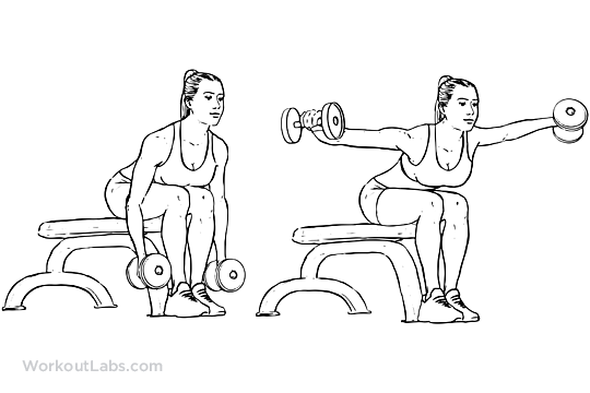 Seated Bent Over Rear Delt Raises