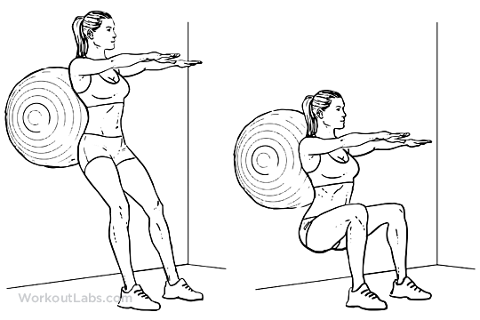 Stability / Swiss / Exercise Ball Squats | WorkoutLabs