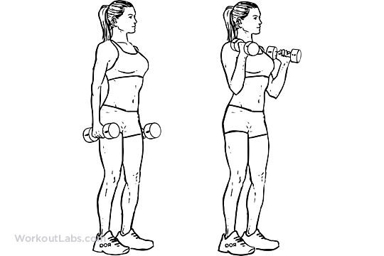 to exercise guide standing dumbbell bicep curls holding a dumbbell ...