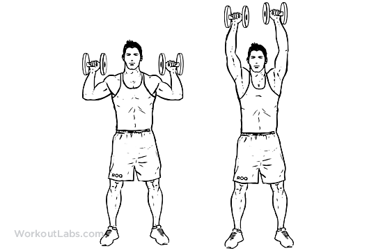 Standing Dumbbell Overhead Shoulder Press | WorkoutLabs