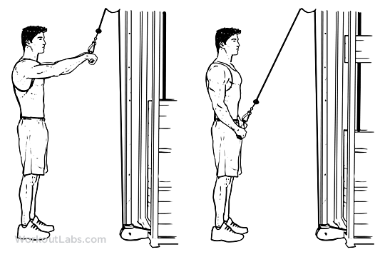 How to Do an Elbow Stand pictures
