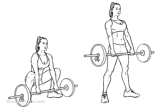 Sumo Barbell Deadlift | WorkoutLabs