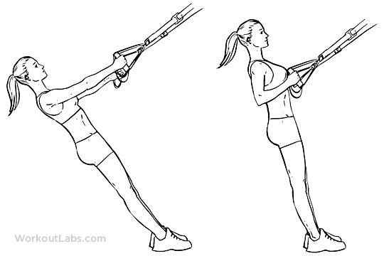 TRX Suspension Strap Rows | WorkoutLabs