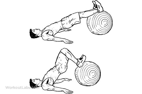 Stability Swiss Exercise Ball Hamstring Leg Curl Hip
