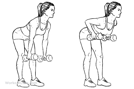 Standing Two Armed Bent Over Dumbbell Rows