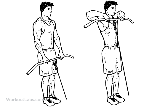 Cable Upright Rows | WorkoutLabs