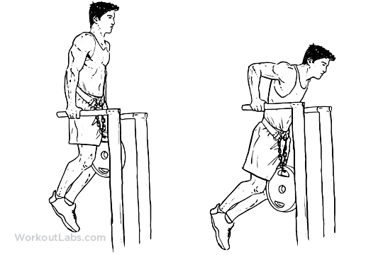 Weighted Tricep Dips | WorkoutLabs