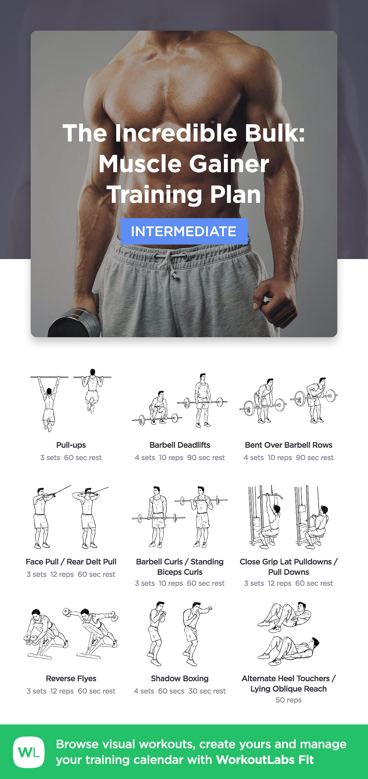 The Incredible Bulk: Muscle Gainer · WorkoutLabs Fit
