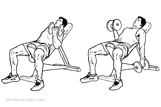 Seated Alternating Incline Bench Dumbbell Curls Workoutlabs