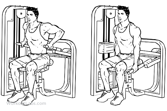 Assisted Machine Seated Tricep Dips Workoutlabs