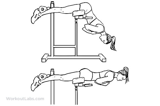Back Extensions Hyperextensions Workoutlabs