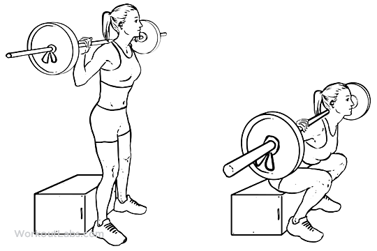 Barbell Box Squats