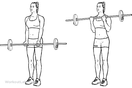 Barbell Curls / Standing Biceps Curls