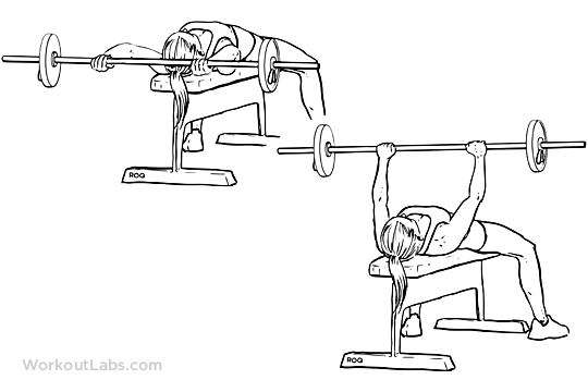 Barbell Pullovers / Lying Chest Overhead Extensions