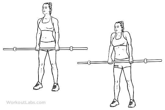Barbell Shoulder Shrugs