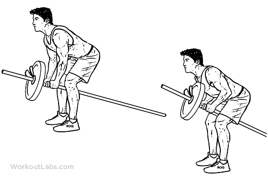 Bent Over Two-Arm Long Barbell Row | Illustrated Exercise