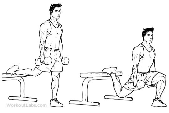 Bulgarian Split Squat Illustrated Exercise Guide
