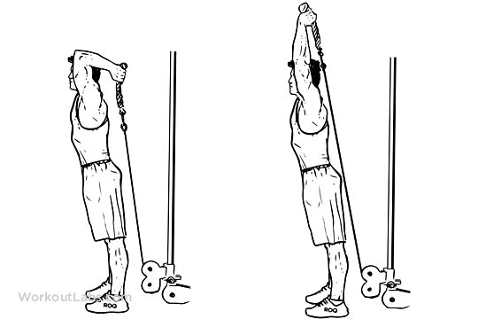 Cable Rope Overhead Triceps Extension Illustrated