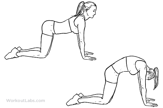 Cat Back Stretch Illustrated Exercise Guide Workoutlabs
