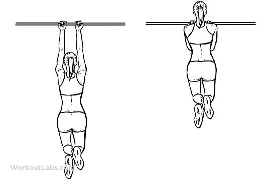 Close Grip Pullups / Chinups | WorkoutLabs
