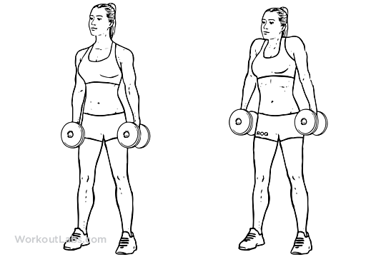 how to get ripped arms using dumbbells