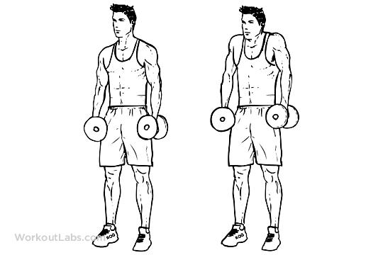 Dumbbell Shrugs | WorkoutLabs