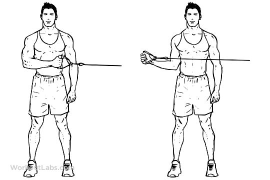 External Cable Shoulder Rotation Workoutlabs