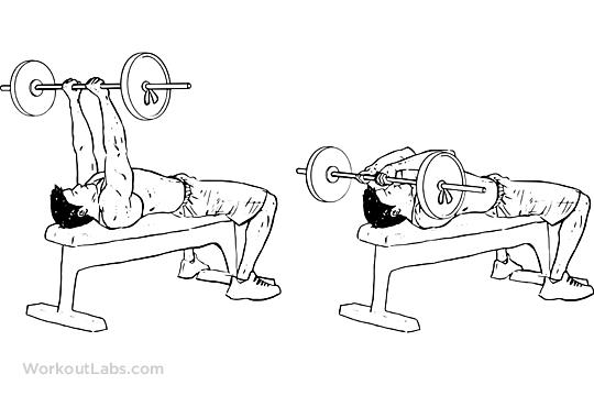Flat Bench Barbell Skull Crushers Workoutlabs