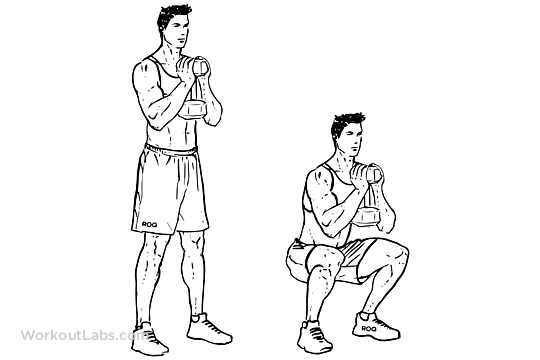 Goblet Squats Workoutlabs