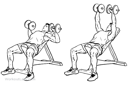 Incline Dumbbell Bench Chest Press Workoutlabs