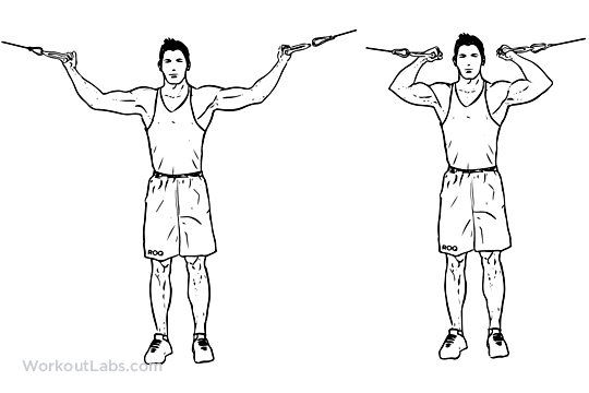 Shoulder Biceps Workout - Bicep Cable Curl