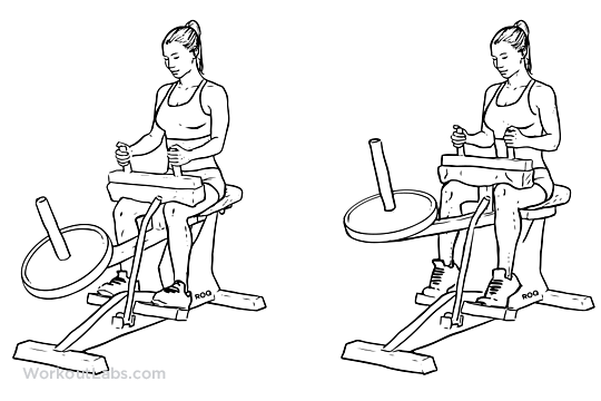 Seated Calf Raise Illustrated Exercise Guide Workoutlabs