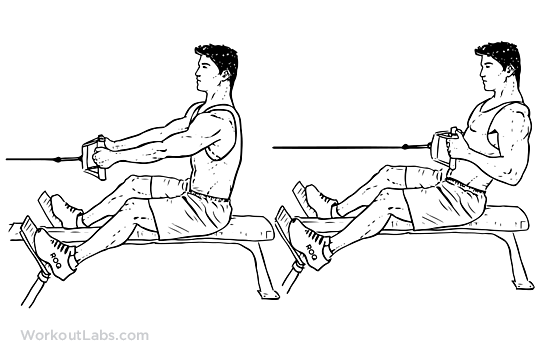 Low Cable Pull : Seated low cable row illustrated exercise guide