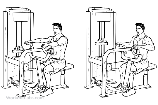 Seated Machine Back Row | WorkoutLabs | 540 x 360 png 79kB
