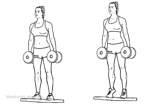 Standing Dumbbell Calf Raise Illustrated Exercise Guide
