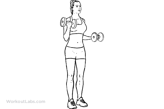 Static Bicep Curls | WorkoutLabs