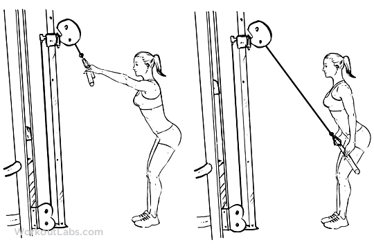 Straight Arm Pulldowns / Pull Downs / Pullovers | WorkoutLabs | 540 x 360 png 63kB