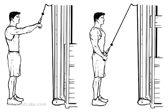 Straight Arm Pulldowns Pull Downs Pullovers Workoutlabs