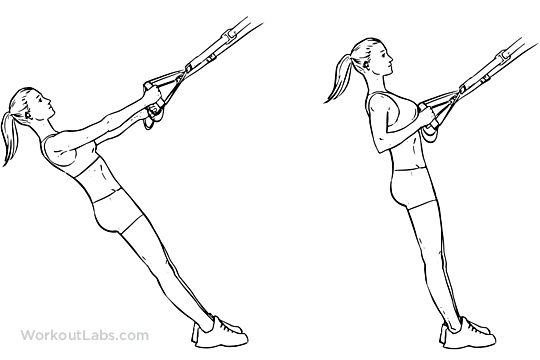 TRX Suspension Strap Row | Illustrated Exercise guide ...