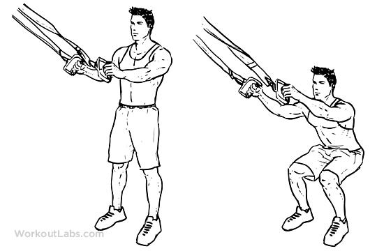 Trx Suspension Straps Squat Illustrated Exercise Guide