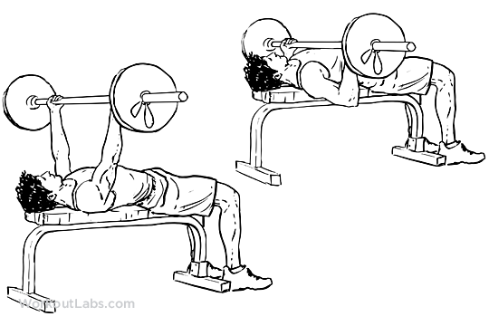 Underhand Grip Barbell Bench Press Workoutlabs